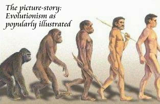 The theory of evolution as popularly illustrated