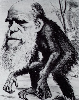 Caricature of Darwin: Would Jesus believe in evolution?